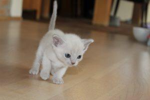 Klara, 4 uger, lilla